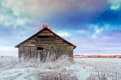 Barn House On The Frosty Fields (k009034) Tags: 500px wooden finland matkaniva oulainen tranquil scene abandoned agriculture barn house building clouds cold countryside farming fields frost landscape nature no people north old rural seasons sky snow winter teamcanon
