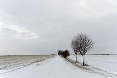 * schnee * snow * III (Anna-logisch) Tags: snow winter cold landscape landschaft outsideisfree nikond7000