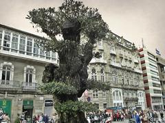 Olivos de Vigo * (Franco D´Albao) Tags: francodalbao dalbao samsungwb700 olivo olivetree árbol tree símbolo symbol vigo portadosol ciudad city