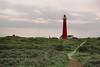 Noordertoren (Skylark92) Tags: nederland netherlands holland waddeneiland wadden schiermonnikoog friesland fryslan vuurturen lighthouse noordertoren tower landscape landschap duinen duinpad dunes path