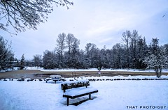 """And finally Winter, with its bitin', whinin' wind, and all the land will be mantled with snow."" ❄️❄️❄️❄️❄️ From last weekend on a snowed in Sunday morning, it was my first time to Garden City Park in Richmond. (gwrdhqsd3) Tags: vancitybuzz naturephotography roadtrip imagesofcanada mustbevancouver amatuerphotography beautifulbc tourcanada vancouverbc vancity discovervancouver explorevancouver vancouversnow snowday thatphotoguy vancouver vancouverisawesome veryvancouver vancitylife gardencity vancouvering richmond vancouverphotographer vancityhype wanderlust earlymorning nationalgeographic"