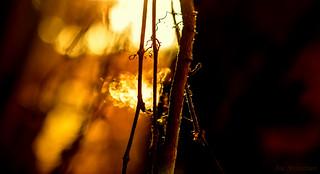 A Shaft of Light Piercing thru the Trees