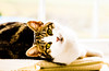 Cassie hanging out (PDKImages) Tags: cat black ragdoll monochrome pet animal feline blackcat asleep eyes calming