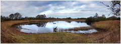 Rothchilds Mere Panorama. (vegetus aer) Tags: woodwaltonfen greatfen greatfenproject wildlifetrust bcnwildlifetrust nnr cambridgeshire wildlife rx10m3 landscape panorama