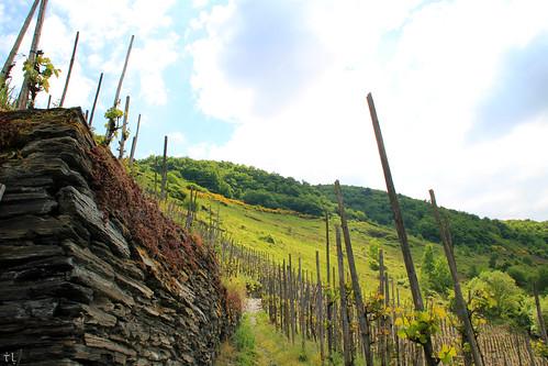 Bernkastel's vineyards