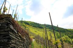 Bernkastel's vineyards (gráce) Tags: germany bernkastel vinegrove vineland vineyard landscape nature sky clouds canon canoneos550d