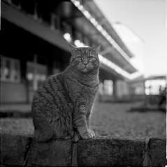 Cat, Lund, Sweden (photo_by_kirill) Tags: yashica bw kodak tmax xtol 6x6 yashicamat medium format square cat epson v500