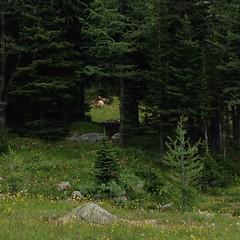 7-107 (Gnarlene) Tags: hiking wildlife banff healypass