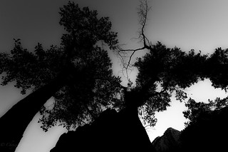 Tree, Mountain, Leaf