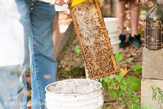 (AndiVanPhotog) Tags: family friends people nature sweet bees smoke harvest insects science honey local pollen honeycomb localhoney bottled harvesting honeybees familyowned douglasvillega tyndallhoneyharvest2015 psbeefarm