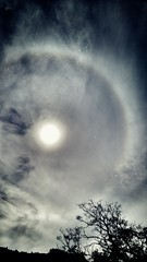 Earlier this afternoon in Monterey #lgg4 #solarhalo (MinceyFresh) Tags: solarhalo lgg4