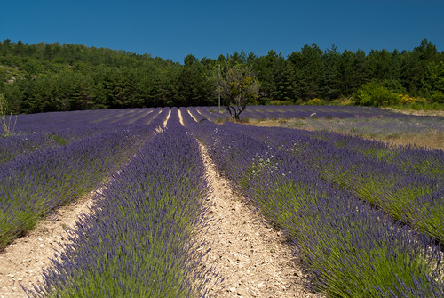 Provence_09_039
