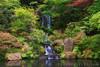 Rhododendron Garden (terenceleezy) Tags: oregon portland rhododendron pdx portlandjapanesegarden rhododendrongarden rhodies iphone6s shotoniphone6s