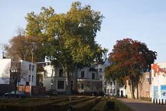 Gigantische Boom (josbert.lonnee) Tags: bigtree enschede hugetree klokkenplas groteboom gigantischeboom