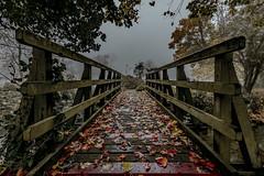 footbridge2 (Steve J Cottis) Tags: park fog footbridge dartford tokina1116mm28 brooklandslake nikond5300