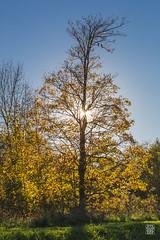 2015-11-01_Q8B3943 © Sylvain Collet.jpg (sylvain.collet) Tags: autumn france nature automne sur marne vairessurmarne vaires
