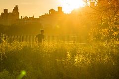 Sunset Runner (dicksoto) Tags: nyc newyorkcity autumn light sunset newyork leaves backlight leaf centralpark manhattan running run sunflare jacquelinekennedyonassisreservoir