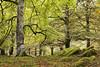 Udazkena Aralarren (jonlp) Tags: county autumn fall nature forest landscape colours natura bosque basque navarre euskal herria basoa nafarroa aralar udazkena koloreak pagadia baraibar paisajea udazkeneko