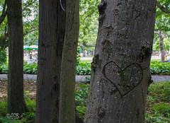 Details (Lucas Candido Rodrigues) Tags: park parque love heart amor corao