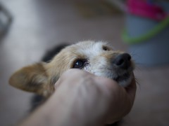 """17 Years Together"" (The Visual Experience) Tags: leica portrait dog love animals puppy eyes depthoffield panasonic summilux feelings 25mm 25mmf14 dgsummilux"