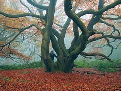 My Autumn (kenny barker) Tags: self scotland explore