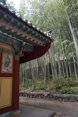 쌍계사,하동,Korea (ott1004) Tags: 감나무 hadong 쌍계사 최참판