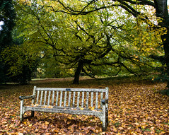 The Lonely Bench (Elementjrose7) Tags: autumn trees colors bench arboretum westonbirt leafs