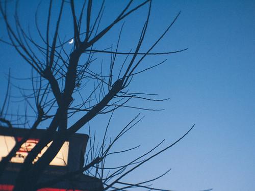 moon - tree