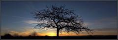 - und immer wieder .... ... ..... ... - (HORB-52) Tags: berndsontheimer badenwrttemberg blackforest schwarzwald fortnoire sonnenaufgang sonne