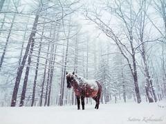 alone in snow (MakiEni777) Tags: horse animal snow winter season japan