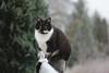 (nettisrb) Tags: cat katze kater hauskatze 🐈 cats katte kitten kitty feline felino felin gatti bokeh
