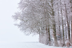 170A7307 (Ricardo Gomez A) Tags: winter snow trees landscape arbol invierno nieve árbol tree baum schnee paisaje landschaft cold niebla fog nebel frio kalt