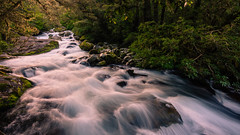 Afternoon light Marion waterfall (inkasinclair) Tags: nature landscape nikond7200 longexposure milfordsound southisland beechtrees forest rocks water cascades waterfall newzealand marionwaterfall