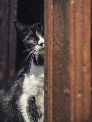 Cat of Spain (elparison) Tags: camino santiago campo porta cloud cat gatto gatti