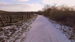 14 km am Morgen... (che1899) Tags: lauf laufen stammersdorf gabrissen indengabrissen weinberge