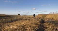 Buiten de gebaande paden lopen... (Jan Wedema) Tags: dollarddekiekkaastebuitendijksevogelkijkhut nieuwstatenzijl jeeeweee landschapsfotograaf janwedema dollard wintertijd