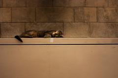 Shush (Eser Aygün) Tags: animal cat hayvan kedi