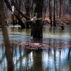 Flooded Banks 007 (noahbw) Tags: captaindanielwrightwoods d5000 desplainesriver nikon abstract branches forest natural noahbw reflection river square trees water winter woods landscape