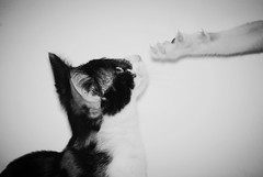 Bailas? (borneirana) Tags: gatos cat flickr posado ngc