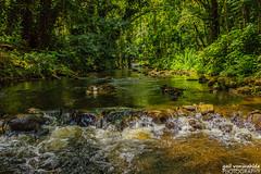 Crossing the Stream (gvonwahlde) Tags: hawaii stream water green landscape hi bigisland canon vonwahlde