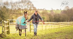Best friends.. (AnthonyCNeill) Tags: horse racehorse thoroughbred animal countryside winter fields outdoor photography photograph photo colour color cold vibrant bokeh shallowdepthoffield pov dof trainer stablehand coat harness gate fence line angle leadingline nikon d750 prime primelens greenery openair equine equestrian grass grassy caballo pferd beautiful best friends trees skyline landscape vista 85mm f14 f2