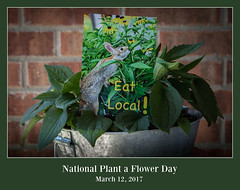 You can do this... (Fay Stout) Tags: nationalplantaflowerday rudbeckia rabbit