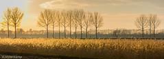 Evening (Wil Molenkamp) Tags: lingezegen goudenuurtje zonsondergang molenkamp sundown evening goldenhour