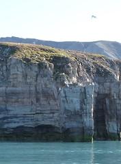glaucous gull colony, Tay Bay, Bylot Island (Ward & Karen) Tags: arctic bylotisland