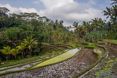 Gunung Kawi Rice Terraces (Grant Gardner) Tags: bali clouds zeiss reflections indonesia rice sony fields gunung batis kawi a7m2 a7mii batis225