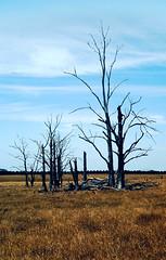 somewhere in South Australia (Stefan Ulrich Fischer) Tags: abandoned forest 35mm dead outdoor oz australia slide scanned outback analogue southaustralia downunder kodakektachrome minoltaxd7 stefanulrichfischer f1fischer