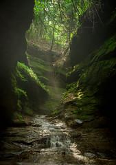 20150530-IMG_1850.jpg (Shanti__) Tags: nature beauty illinois greenery turkeyrun chicagoturkeyrun