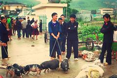 IMGP9333 (crazyycat.0209) Tags: hagiang ethnicmarket dongvan weeklymarket hàgiang chợphiên đồngvăn dântộcthiểusố trẻemvùngcao chợphiênđồngvăn dongvanethnicmarket fivecolorstickyrice