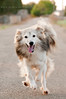 Willy (Andrea Brocca) Tags: dog cane nikon running run puglia willy corsa naturalistica d300s andreabrocca andreabroccait