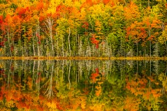 Autumn at the water's edge (Cole Chase Photography) Tags: autumn reflection fall sunrise canon michigan 5d upperpeninsula markiii hiawathanationalforest redjacklake